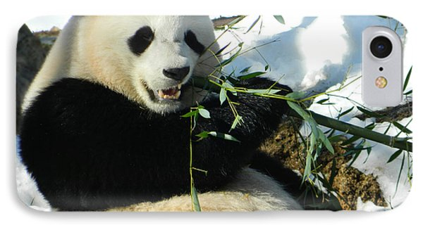Bao Bao Sittin' In The Snow Taking A Bite Out Of Bamboo1 IPhone Case by Emmy Marie Vickers