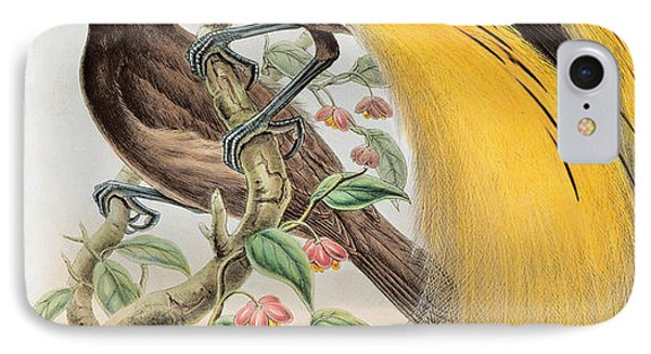 Bird Of Paradise IPhone Case by John Gould