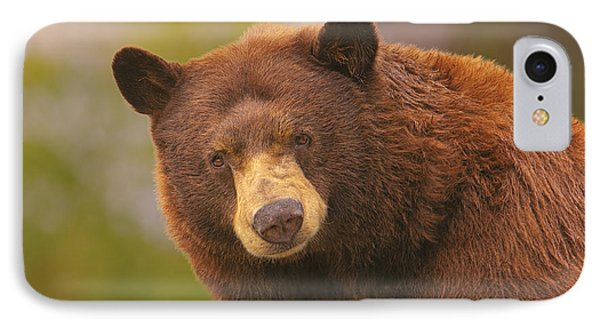 Black Bear IPhone Case by Brian Cross