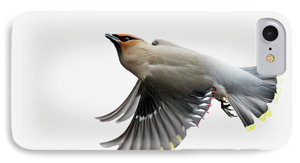 IPhone Case featuring the photograph Bohemian Waxwing  by Mircea Costina Photography