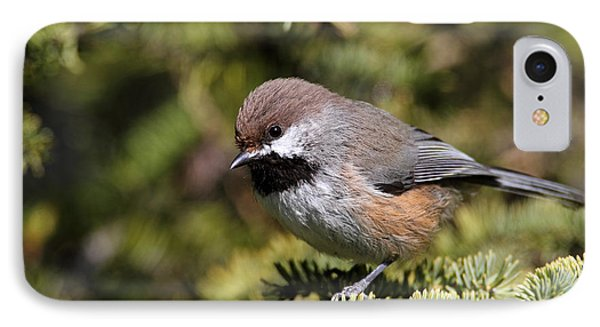 Boreal Chickadee IPhone Case by Doug Lloyd