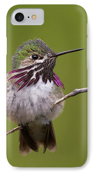Calliope Hummingbird Phone Case by Doug Herr