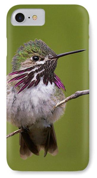 Calliope Hummingbird IPhone Case
