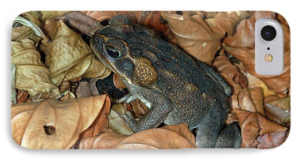 IPhone Case featuring the photograph Cane Toad by Breck Bartholomew