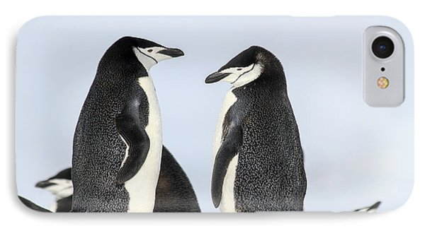 Chinstrap Penguins Pygoscelis Antarctica IPhone Case by Lilach Weiss