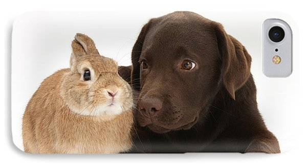 Chocolate Lab & Netherland-cross Rabbit IPhone Case