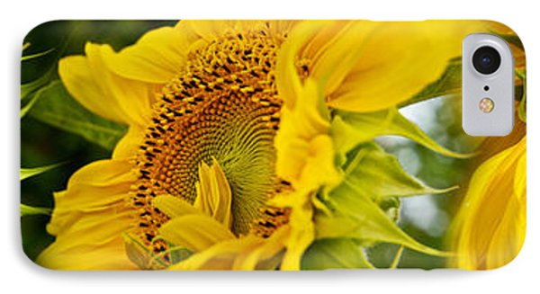 Close-up Of Sunflowers IPhone Case by Panoramic Images
