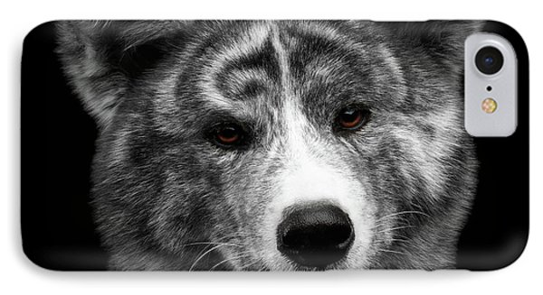 Closeup Portrait Of Akita Inu Dog On Isolated Black Background IPhone Case by Sergey Taran