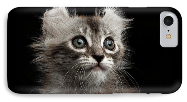 Cute American Curl Kitten With Twisted Ears Isolated Black Background IPhone Case by Sergey Taran