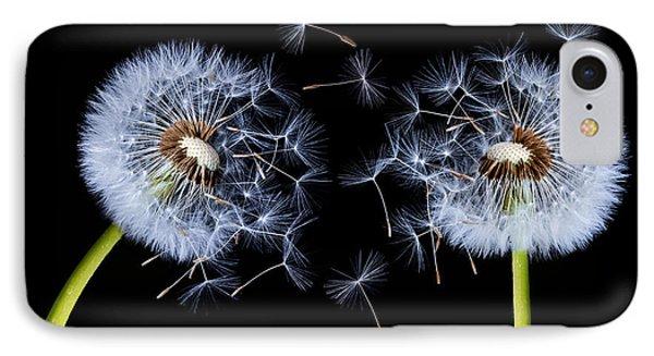 Dandelion On Black Background IPhone Case by Bess Hamiti