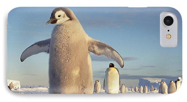 Emperor Penguin Aptenodytes Forsteri Phone Case by Tui De Roy