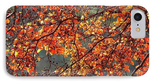 IPhone Case featuring the photograph Fall Leaves by Nicholas Burningham