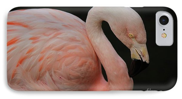 Flamingo Phone Case by Paulette Thomas