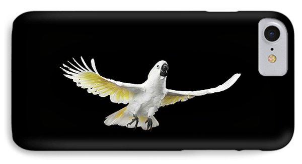 Flying Crested Cockatoo Alba, Umbrella, Indonesia, Isolated On Black Background IPhone Case by Sergey Taran