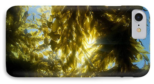 Giant Kelp Forest Phone Case by Dave Fleetham - Printscapes