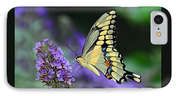 Giant Swallowtail IPhone Case by Rodney Campbell