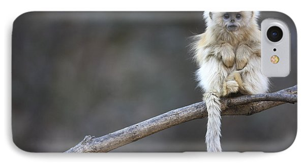 Golden Snub-nosed Monkey Rhinopithecus IPhone Case