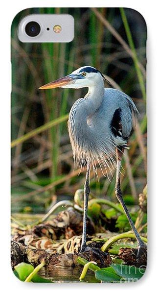 Great Blue Heron Phone Case by Matt Suess