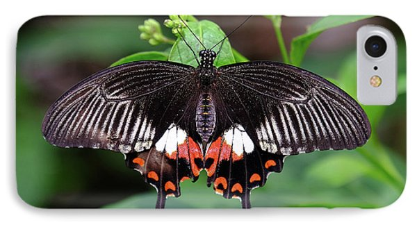 Great Mormon Butterfly IPhone Case by Ronda Ryan