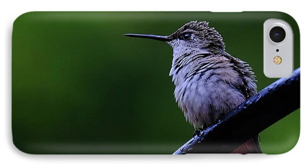 Hummingbird Portrait IPhone Case by Ronda Ryan