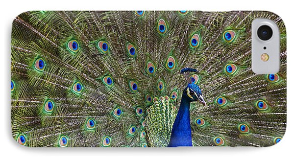 Indian Peafowl Male With Tail Fanned IPhone Case