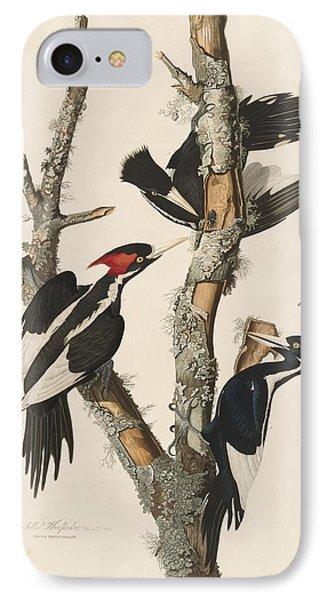 Ivory-billed Woodpecker IPhone 7 Case by Anton Oreshkin