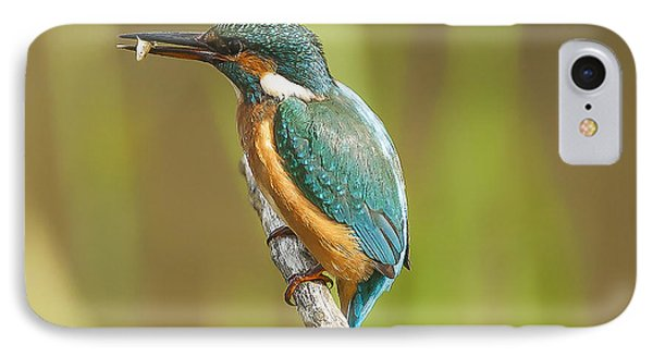 Kingfisher IPhone 7 Case