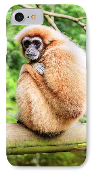 IPhone Case featuring the photograph Lar Gibbon by Alexey Stiop