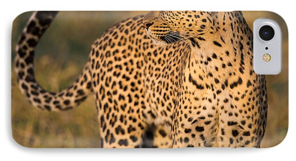 Leopard Panthera Pardus, Serengeti IPhone Case by Panoramic Images