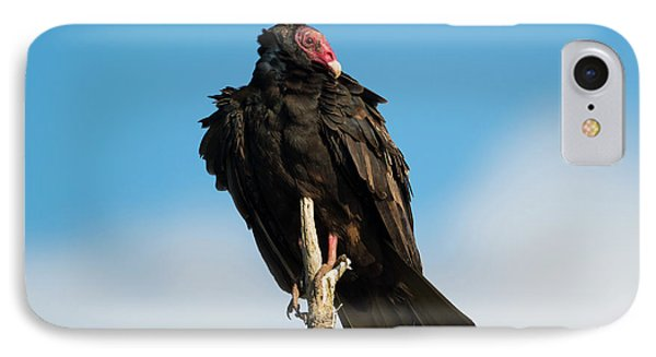 Buzzard iPhone 7 Case - Looking For A Meal by Mike Dawson