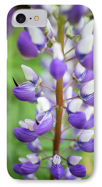 IPhone Case featuring the photograph Lupine Blossom by Robert Clifford