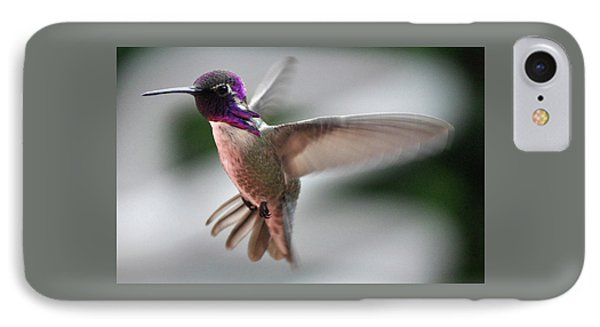 Male Anna's In Flight IPhone Case by Jay Milo