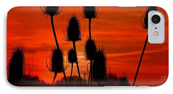 Thistle Silhouette IPhone Case by James Johnson