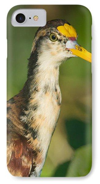 Northern Jacana Jacana Spinosa Chick IPhone Case