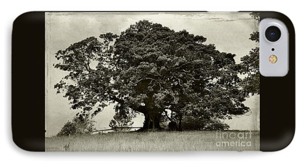 Old Fig Tree Phone Case by Kaye Menner
