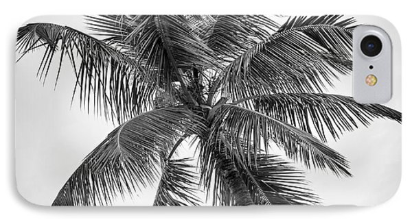 Palm Tree IPhone Case by Elena Elisseeva