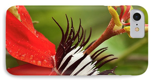 Passionate Flower IPhone Case