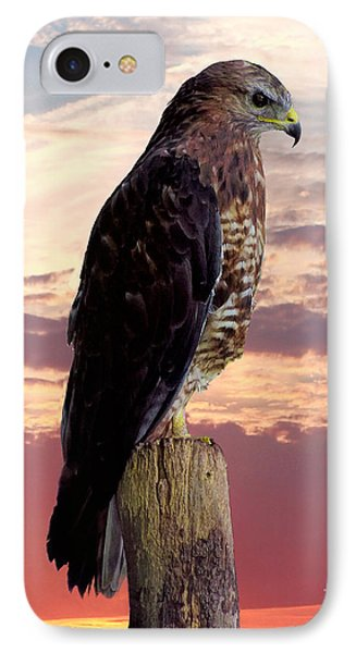 Peregrine Falcon IPhone Case by Lynn Bolt
