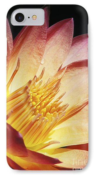 Pink Water Lily Phone Case by Bill Brennan - Printscapes