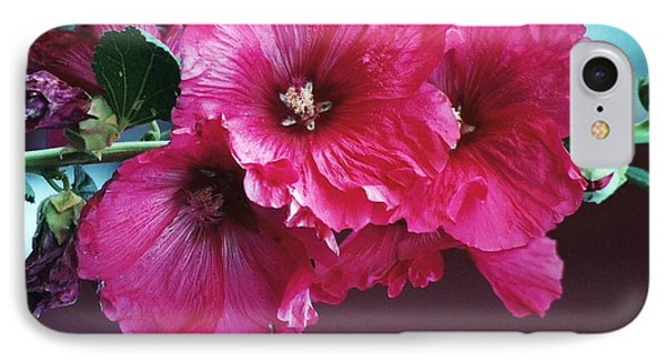 IPhone Case featuring the photograph P's Hollyhocks by Juls Adams