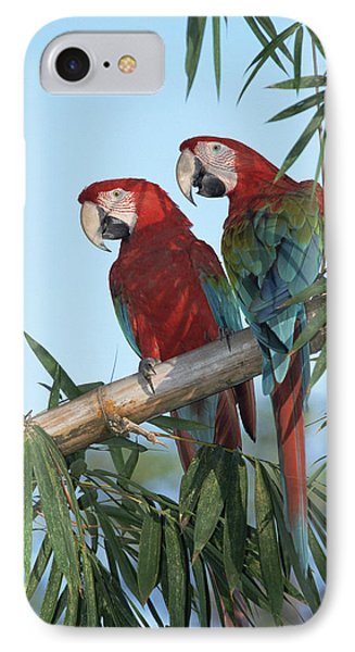 Red And Green Macaw Ara Chloroptera Phone Case by Konrad Wothe