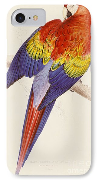 Red And Yellow Macaw IPhone Case by Edward Lear
