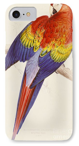 Red And Yellow Macaw IPhone 7 Case by Edward Lear