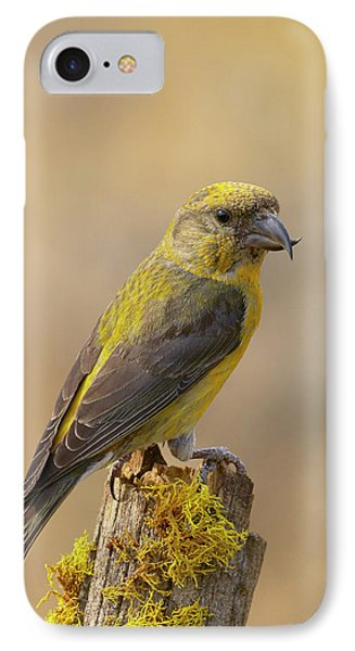 Red Crossbill IPhone Case by Doug Herr