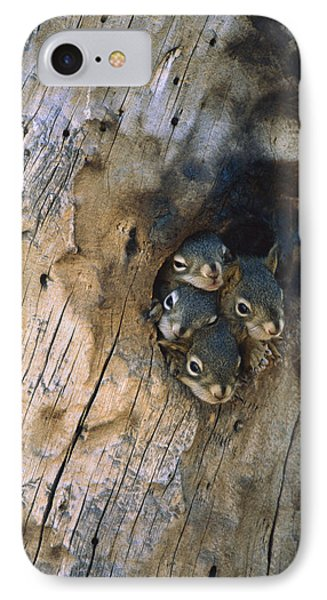Red Squirrel Tamiasciurus Hudsonicus Phone Case by Michael Quinton