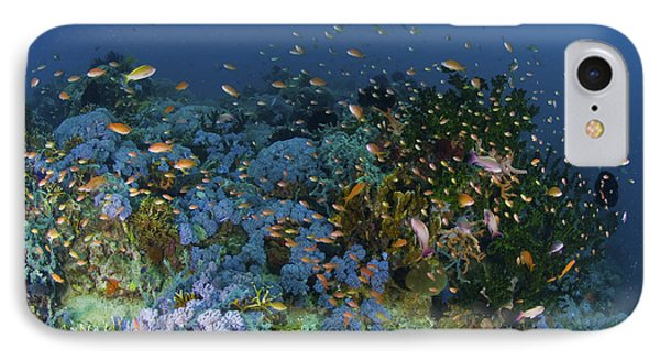 Reef Scene With Coral And Fish Phone Case by Mathieu Meur