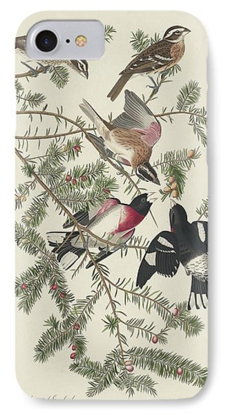 Rose-breasted Grosbeak IPhone Case by Rob Dreyer