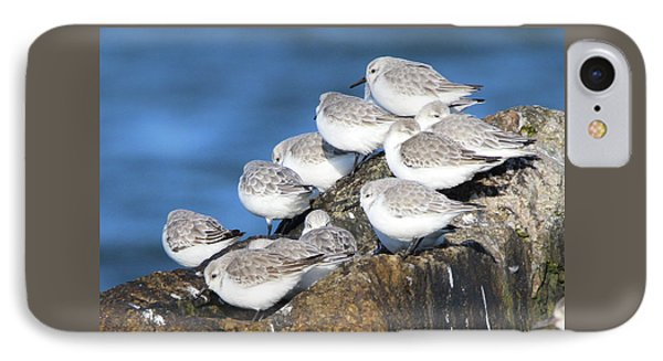 Sanderling Westhampton New York IPhone Case