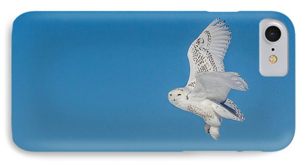IPhone Case featuring the photograph Snowy Owl by Dan Traun