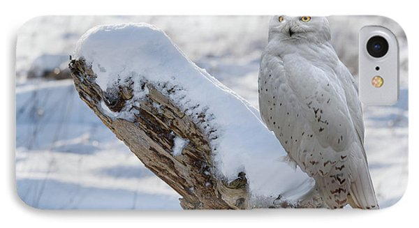 IPhone Case featuring the photograph Snowy Owl by Jim  Hatch